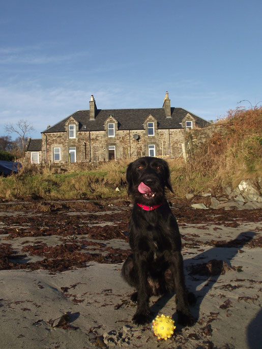 Dog on the beach, Dower House, Isle of Islay, Scotland