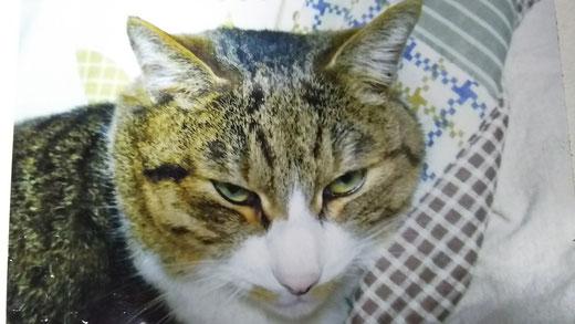 在りし日のモモちゃん  キミは本当の〝わらべうたネコ〟だったんだね♪