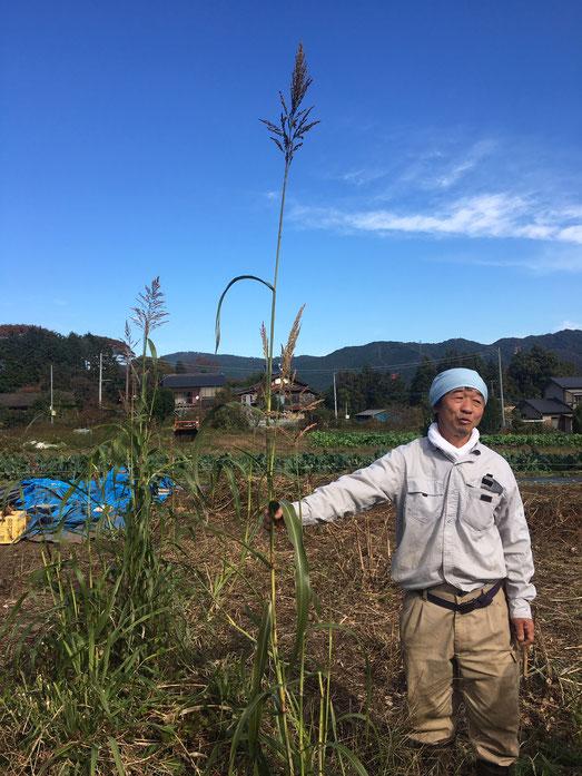 タカキビの自然栽培の農業体験 固定種 体験農場首都圏 すどう農園