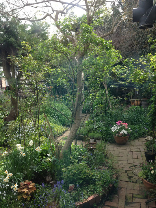 キッチンの窓より見る東の庭