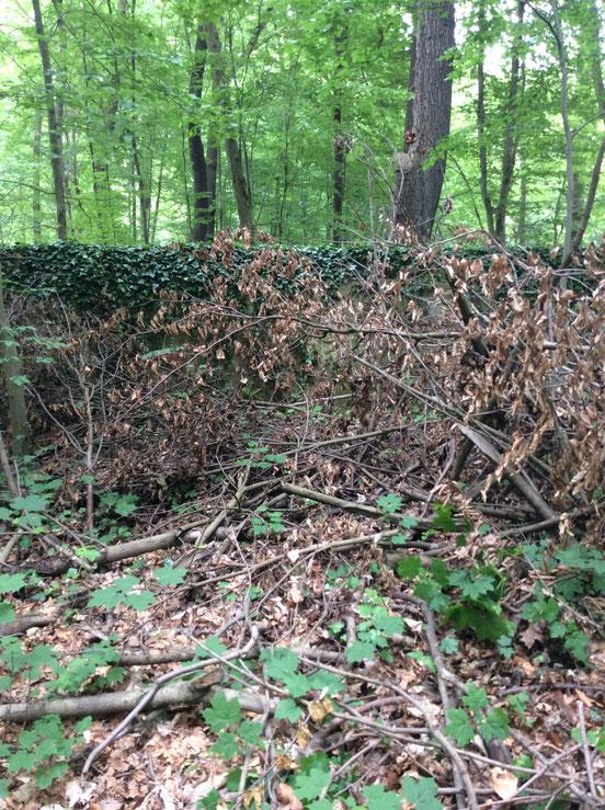 Hier seht ihr abgestorbene Blätter, die vorher grün waren.