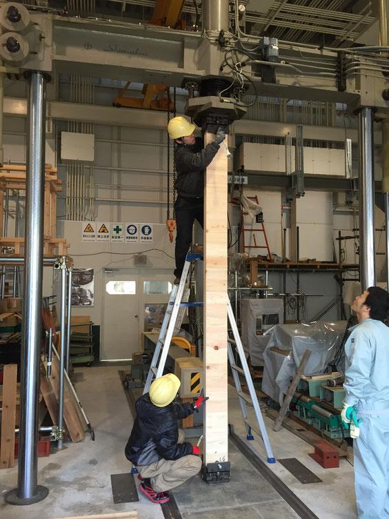 ヒノキ・スギのハイブリッドCLTの座屈試験 試験装置に設置中