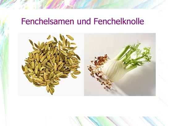 Fenchelsamen und Fenchelknolle