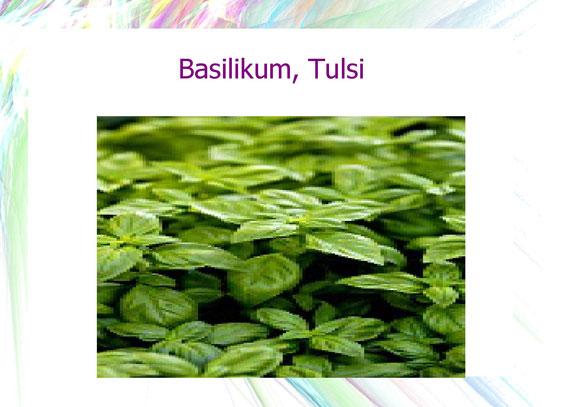 Lebensmittel Basilikum, Tulsi
