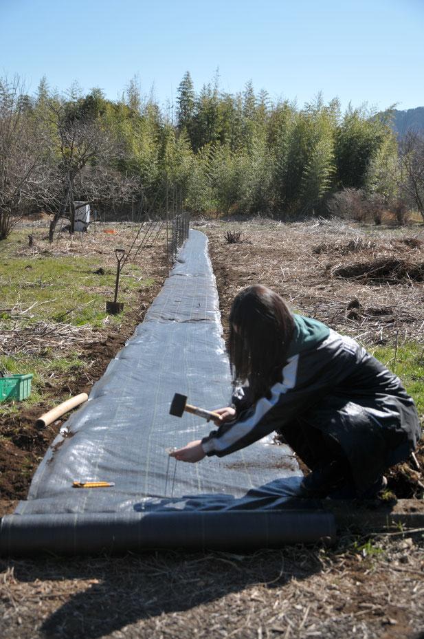 イノシシ除けの柵づくり。まずは防草シートを打ち付けて、その内側に金網、外側に電気柵をします。