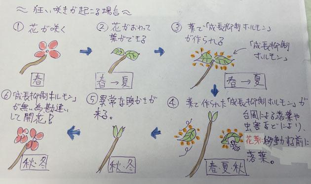 狂い咲きが起こる場合のメカニズム
