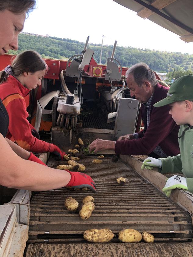 Viele Hände sind auch bei der Ernte mit dem 'Kartoffelvollernter' notwendig.