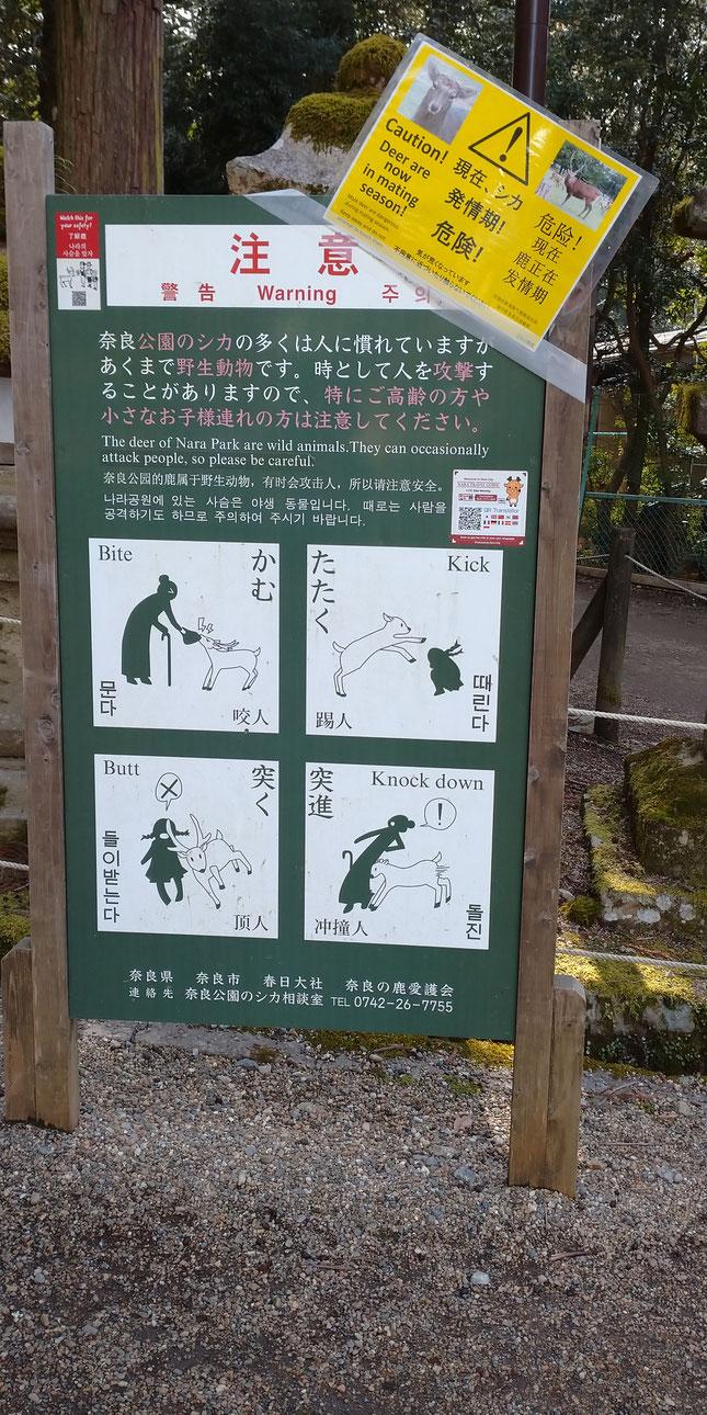 春日大社の神の使い 野生の鹿には注意 京都観光タクシー 英語通訳ガイド永田信明