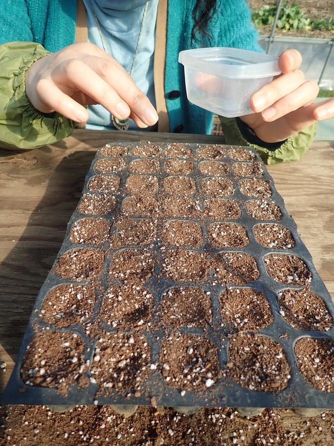 モヒートミント(エルバブエナ)自然栽培のハーブ体験講座