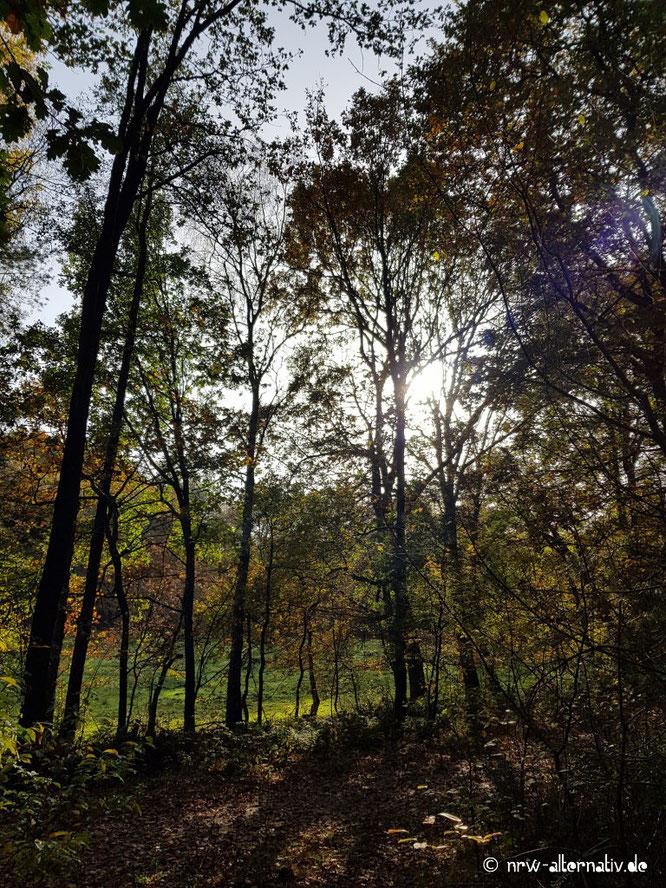 Bäume mit einer Wiese im Hintergrund.