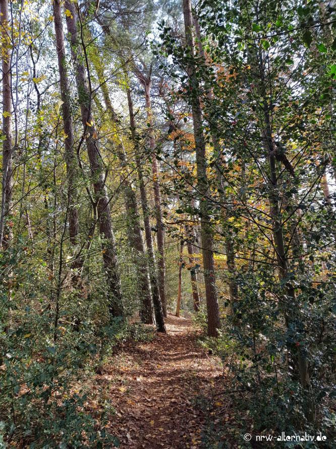 Ein herbstlicher Waldweg auf dem Waldauenpfad bei Hörstel.