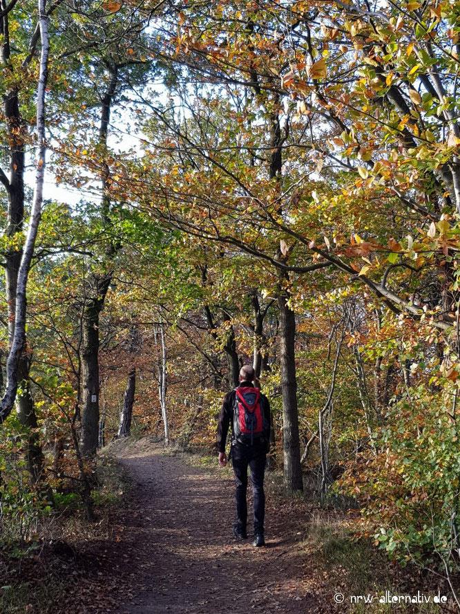 Ein Mann mit Rucksack läuft einen Waldweg entlang.