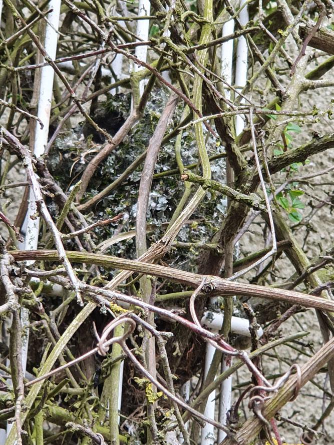 Foto 3 - Das Nest als Nahaufnahme, das oben-seitliche Einflugloch ist gut erkennbar.