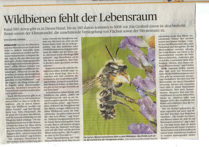 RP 25.07.2020 Bericht Wildbienen