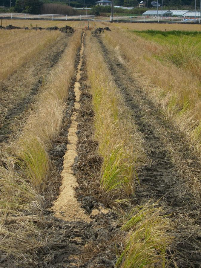 トーヨー産業 暗渠 水はけ改善 農地拡大 コスト削減 農産物 生産性拡大 土地改良技術