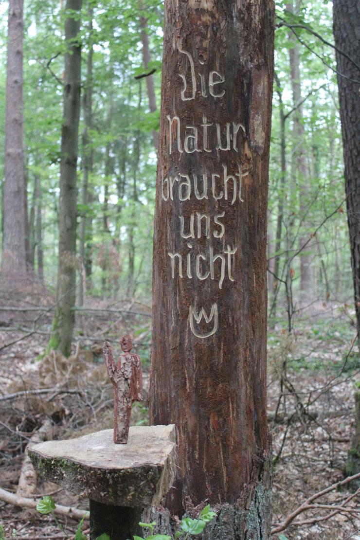 Foto: S. Ecker - Bürgerkommentar im Staatswald RLP