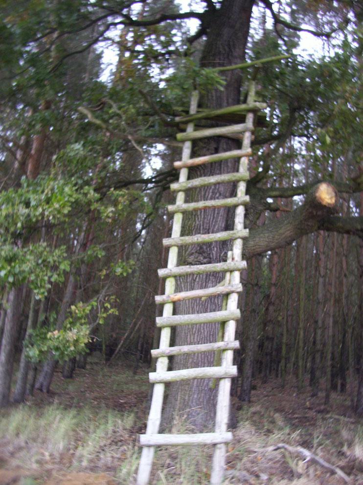 Wow diese Leiter ist ganzschön hoch.Sie führt zu einem Jägerstand.Es ist gefährlich dort hoch zu gehen denn die Leiter könnte kaputt gehen.