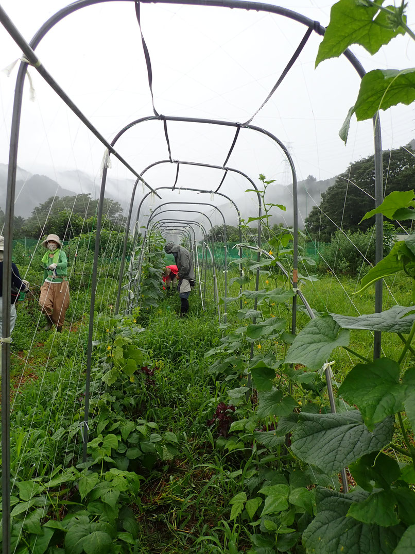 さとやま農学校は初心者のための無農薬栽培の野菜作り教室です。