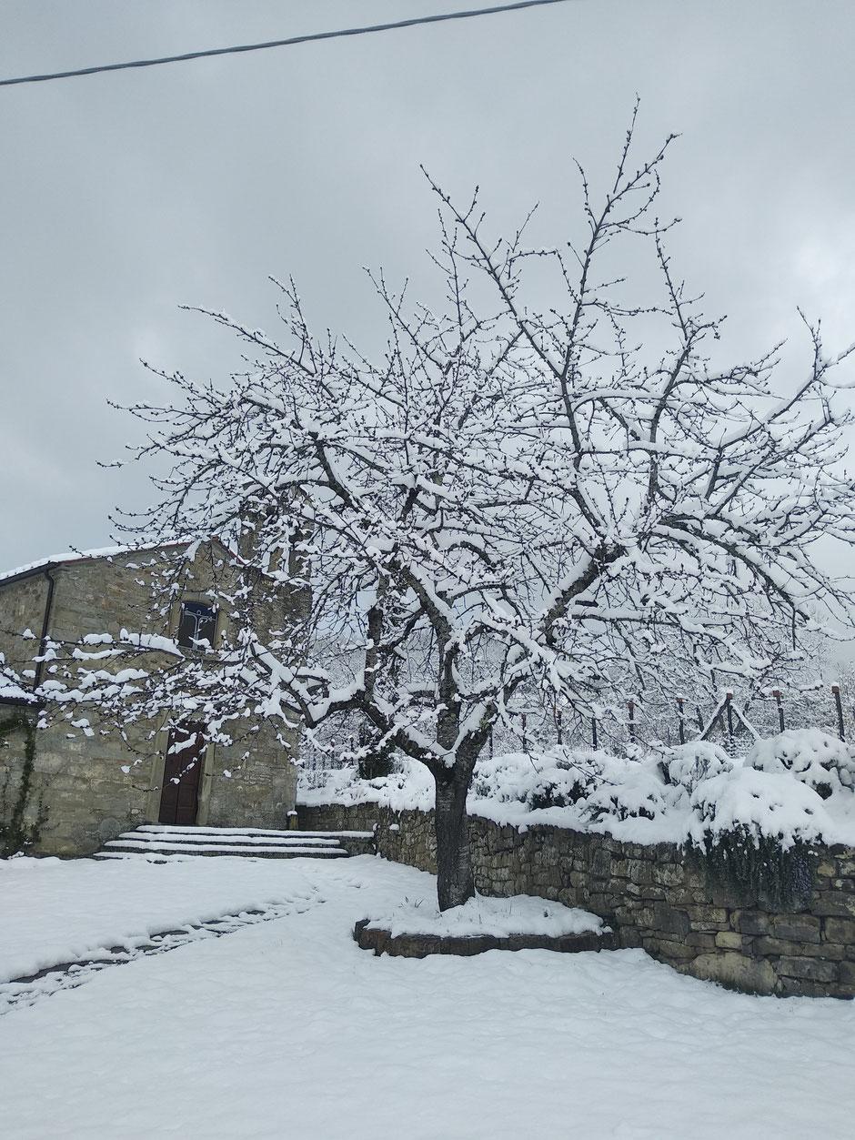 4 Quorle mit Kirschbaum im Schnee