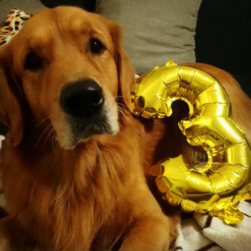 Brutus Anton an seinem Geburtstag 🎂