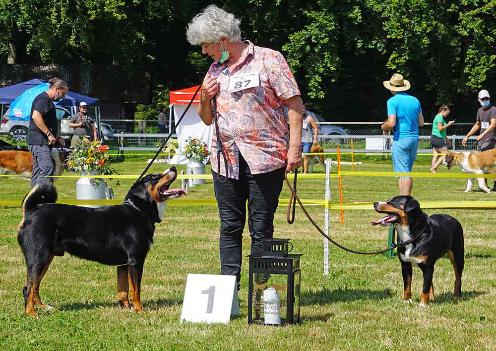 Appenzeller Sennenhund an der Club-Show