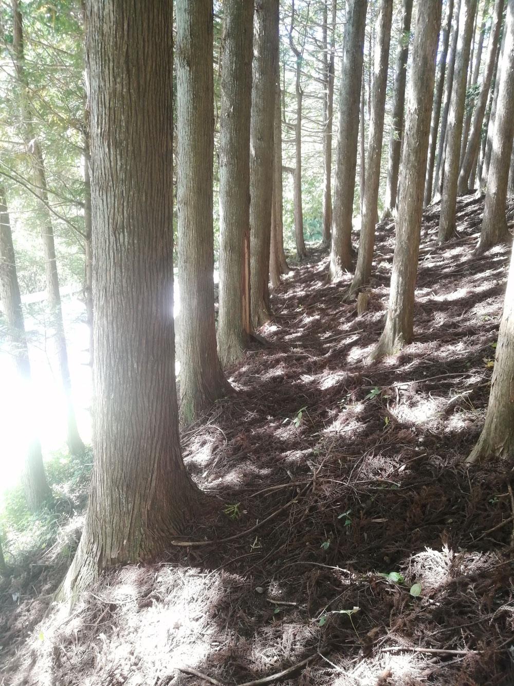 歩道がほとんどないので、道幅が狭い道では、少し林の中へ入ったり・・