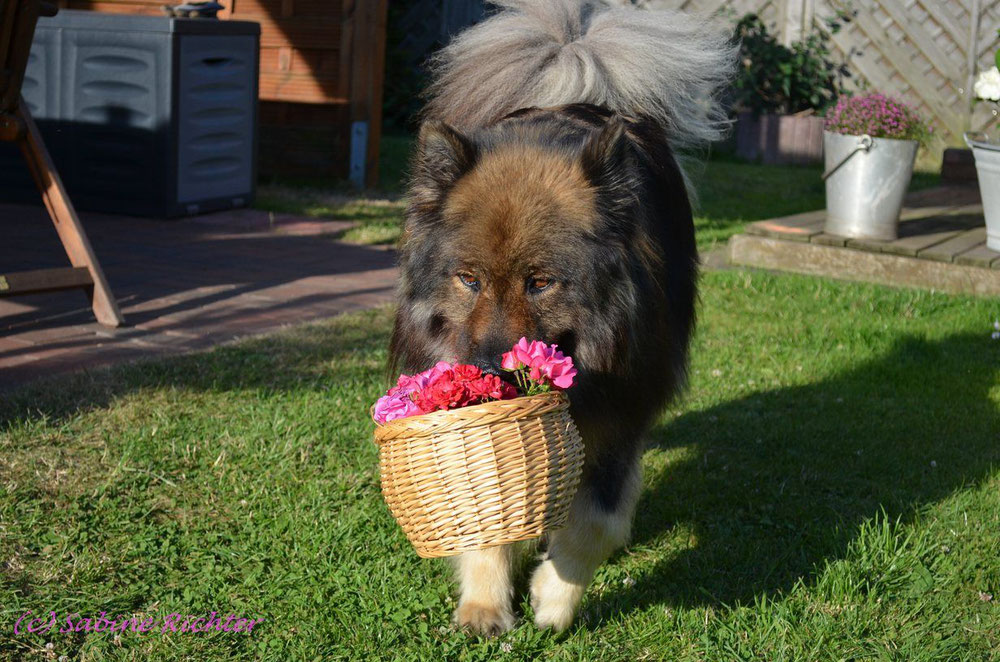 Ach, Sienna wollte doch lieber Blumen, Bier darf sie jetzt doch nicht!