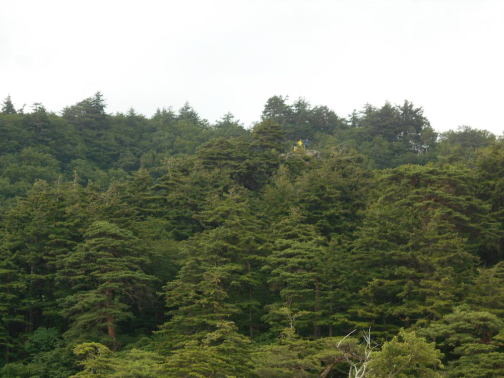Can you recognize people in yellow clothes? It looks like three mens are standing on top of the tree. This is a special observatory in Towadako.       Only local people can go to such a wonderful place now.