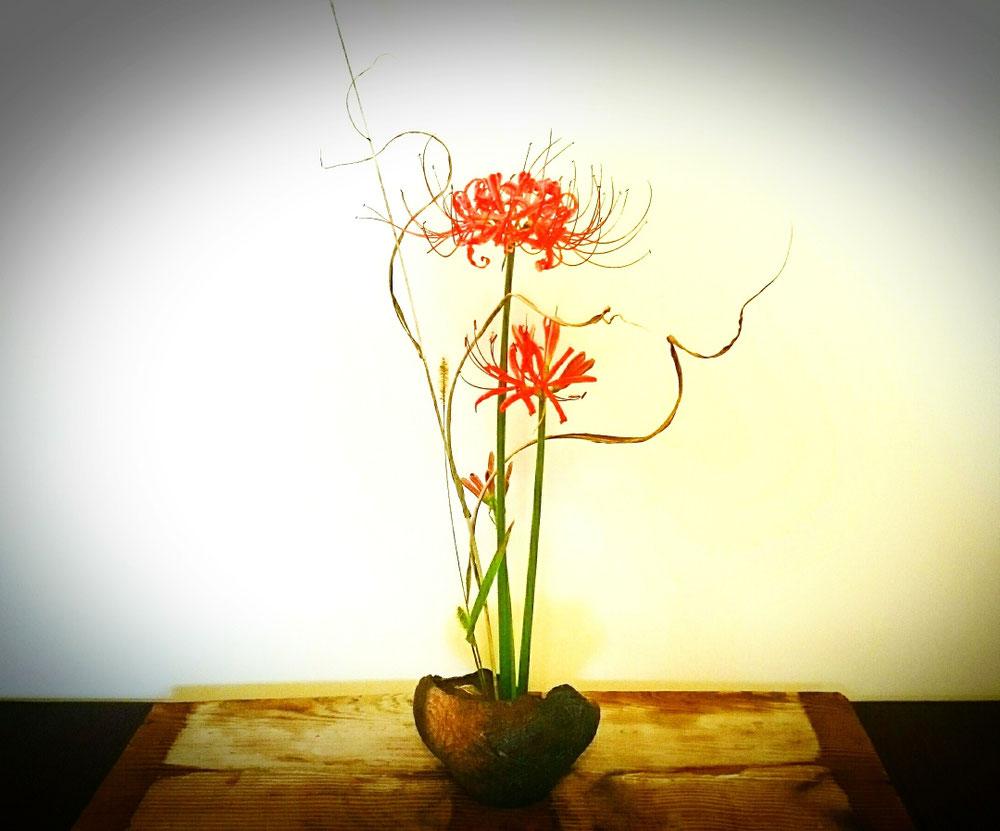 花: 曼珠沙華、狗尾草、芒    器: 縄文土器