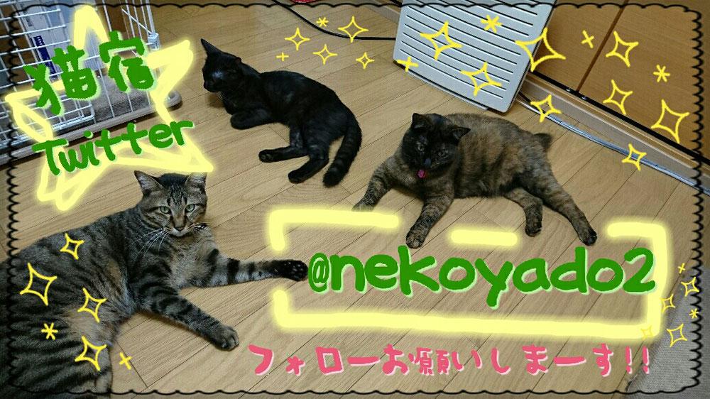 猫宿Twitterアカウント作りましたー!!