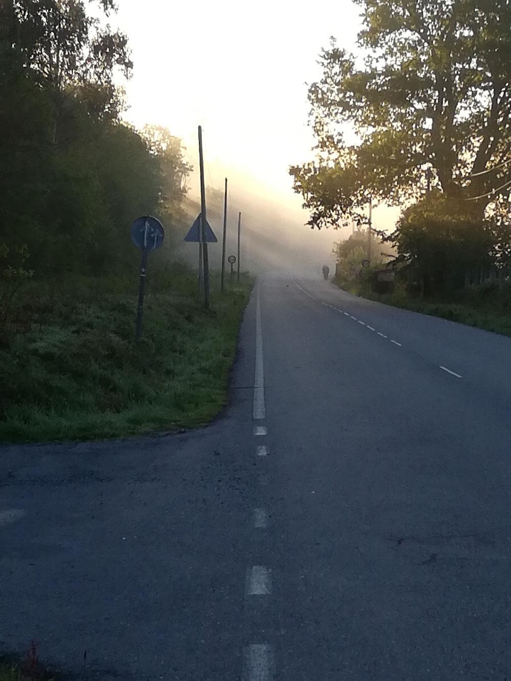 Da tauchen sie auf aus dem Nebel am Morgen 😊