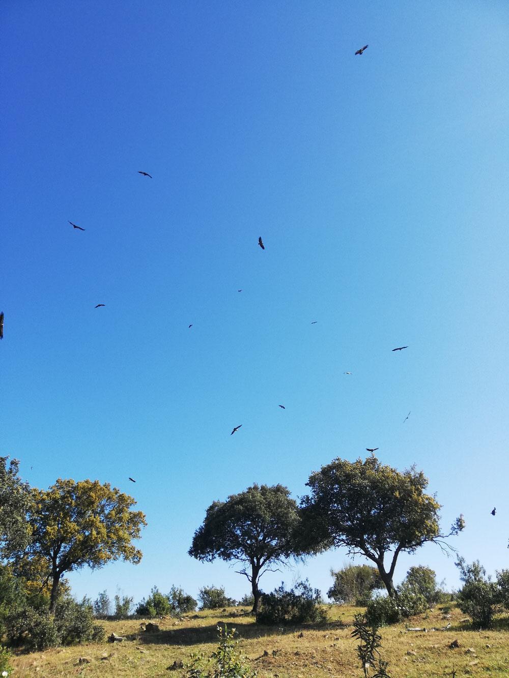 Geier oder Adler?