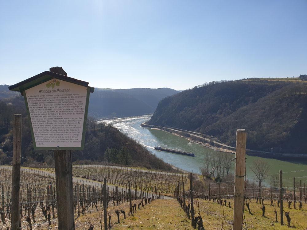Bornicher Weinlehrpfad mit tollem Ausblick im Februar