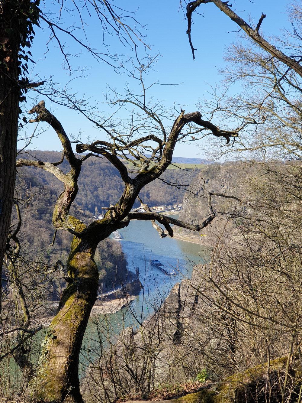 Blick vom Spitznack auf den Rhein im Februar