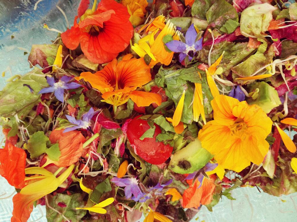 D.I.Y. Rezept bunter Sommersalat mit essbaren Blüten, schnell und einfach selbst gemacht