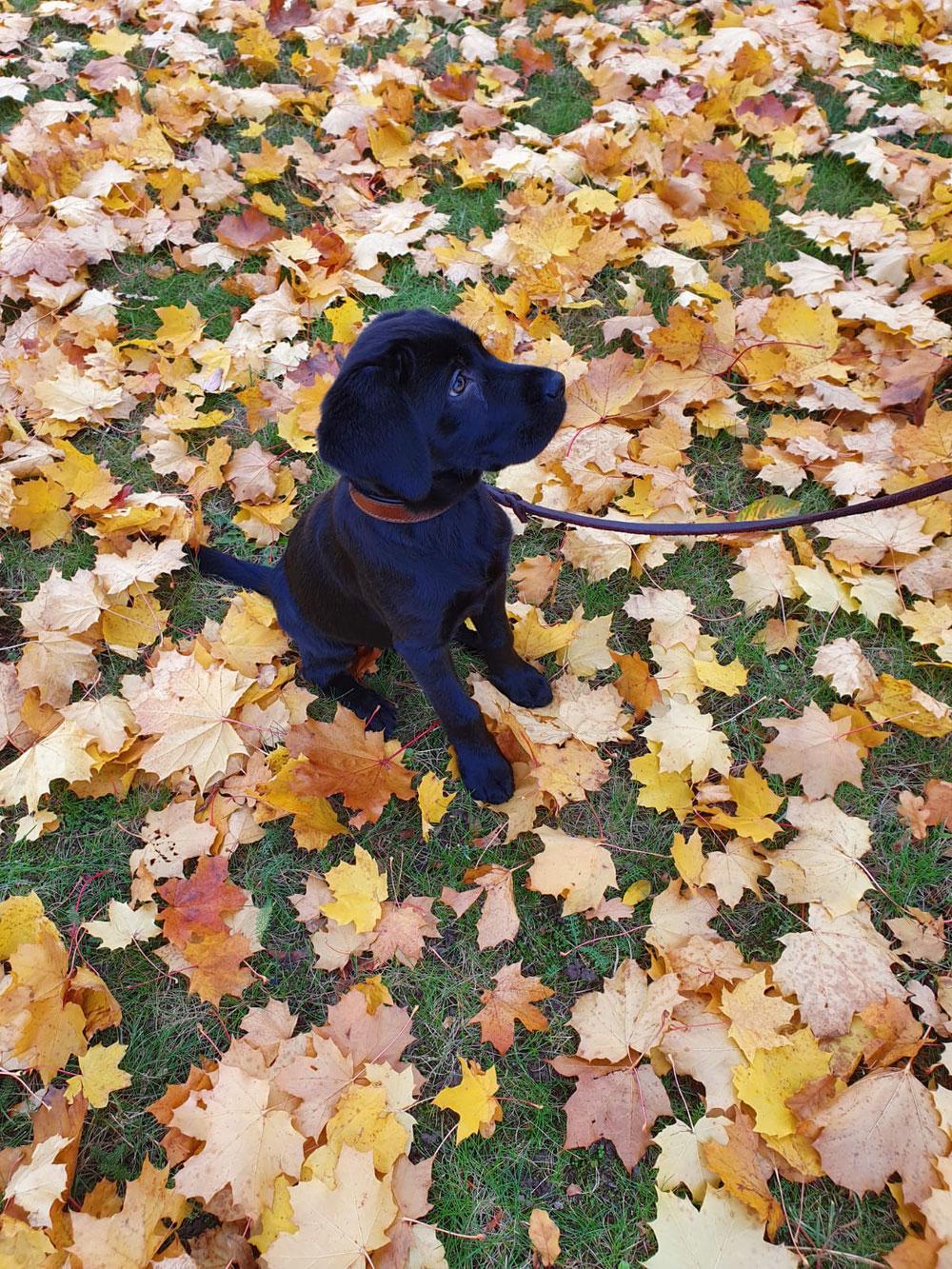 Im Herbst sieht die Lage -hoffentlich- besser aus als befürchtet!