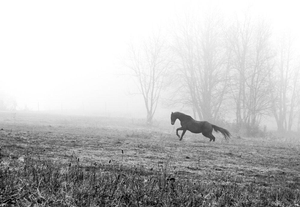Cheval de brume