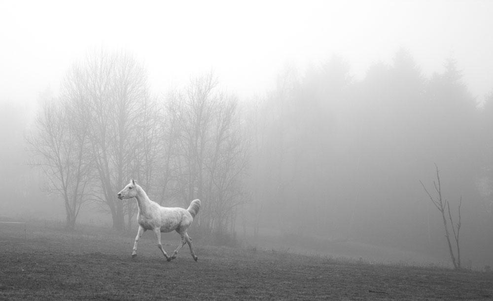 Danser dans le brouillard