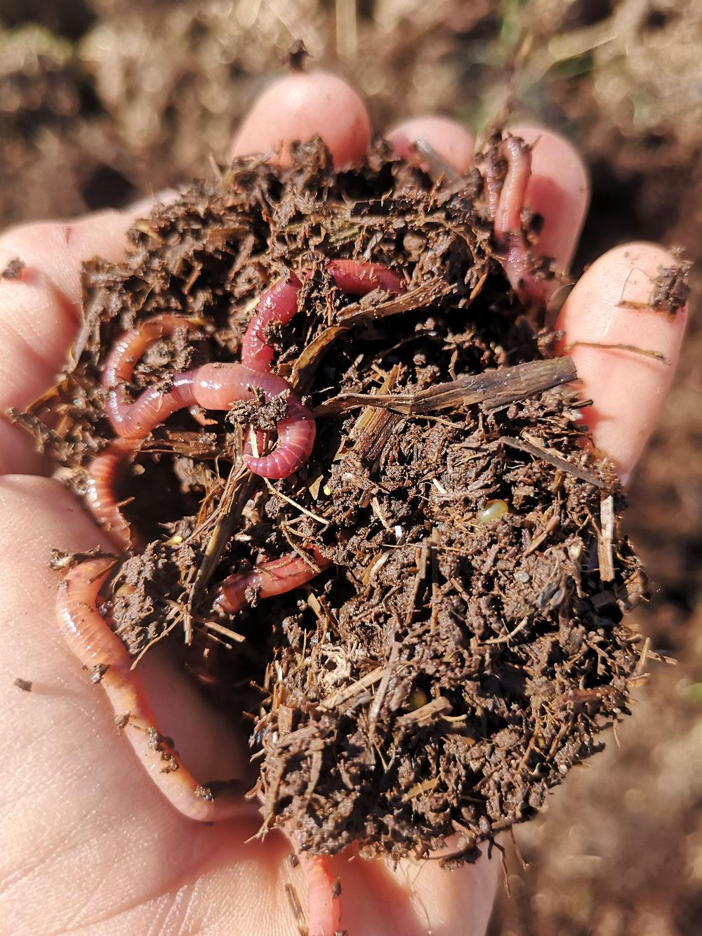 Lombrichi, i nostri preziosi aratri naturali