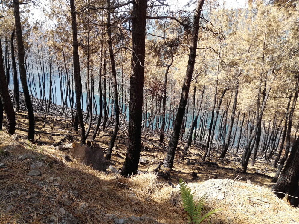 Ausgebrannte Wälder vor Grandas de Salime