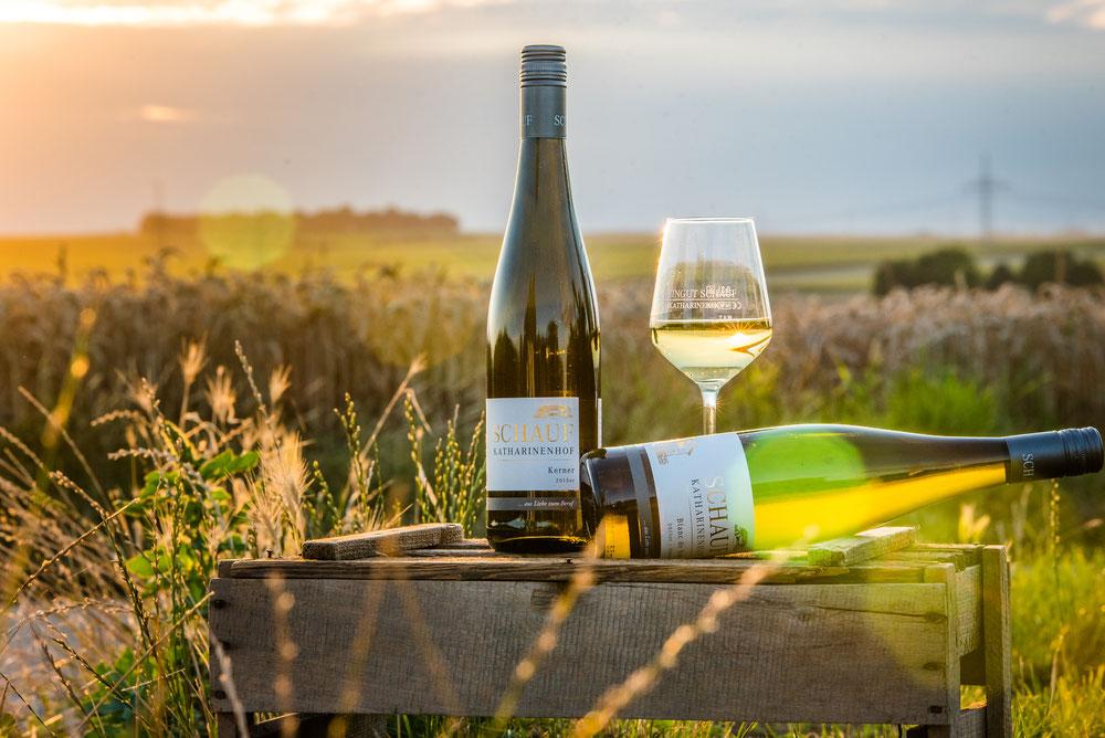 Stimmungsvolle Aufnahme von Weinflasche im Weinberg
