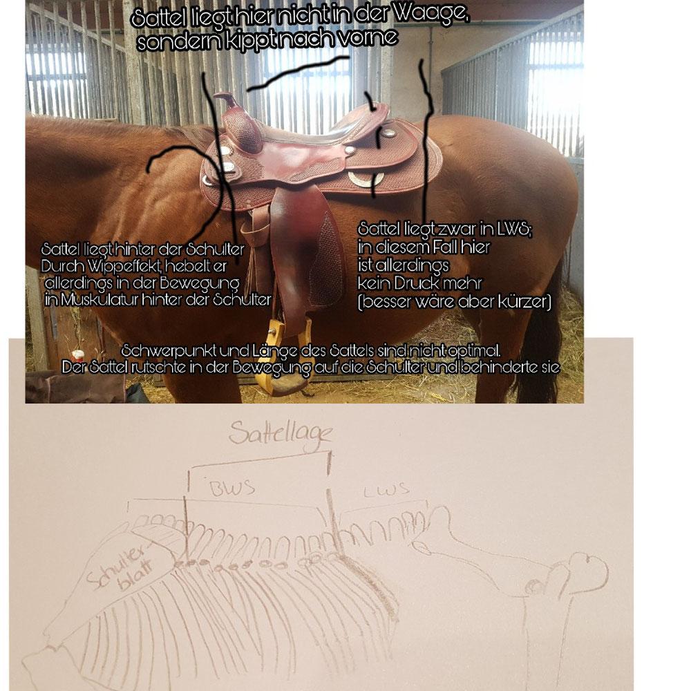 Bemerkung: Die Zeichnung ist anatomisch nicht Korrekt (an mir ist leider kein Zeichner verloren gegangen)  Anhand von Fotos kann man keinen Sattel beurteilen. Das Foto soll nur als Veranschaulichung dienen.