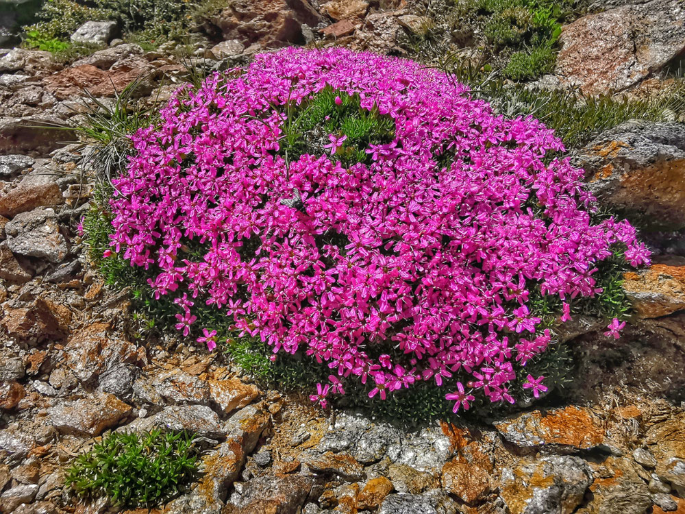Bunte Blumen zieren den Weg