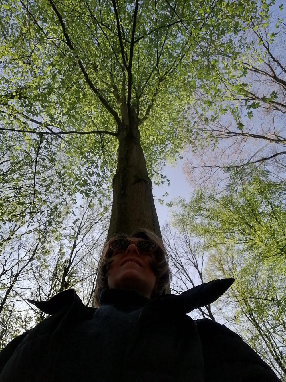 Immer den Kronenpunkt, wie der Baum seine Krone, zum Himmel ausrichten