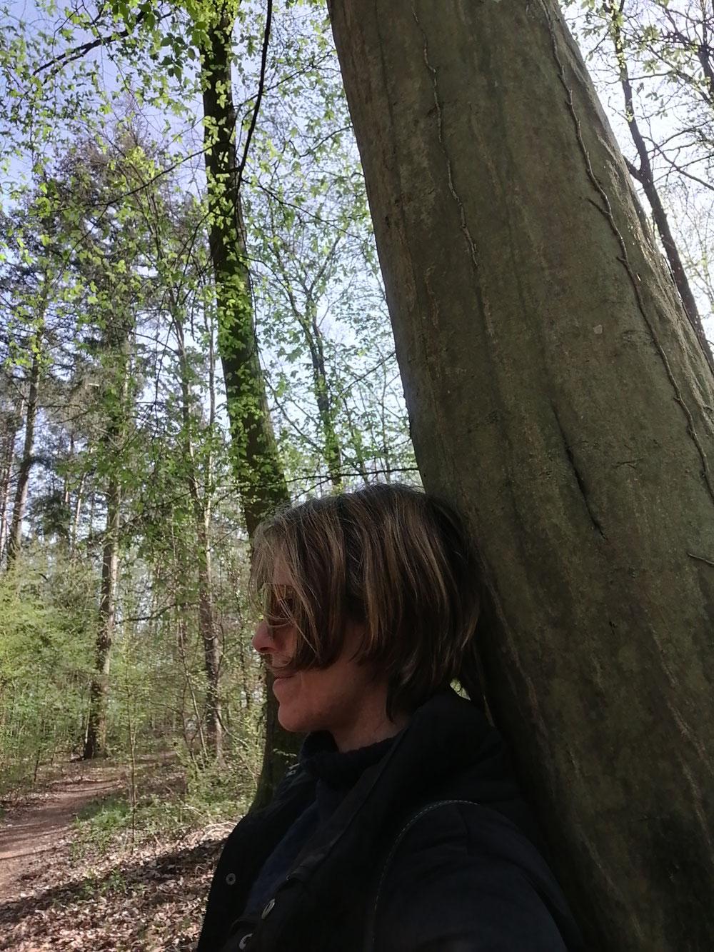 Sich in die Länge ziehen entlang des Baumes