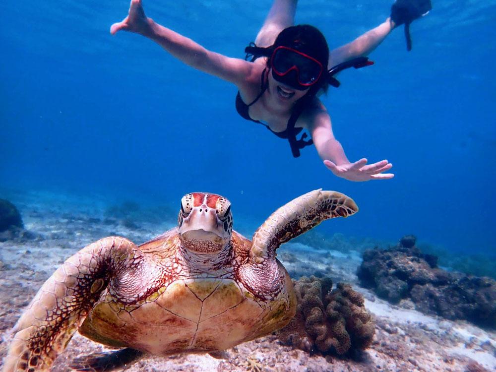 ウミガメ満喫ツアー ハーミットクラブ宮古島