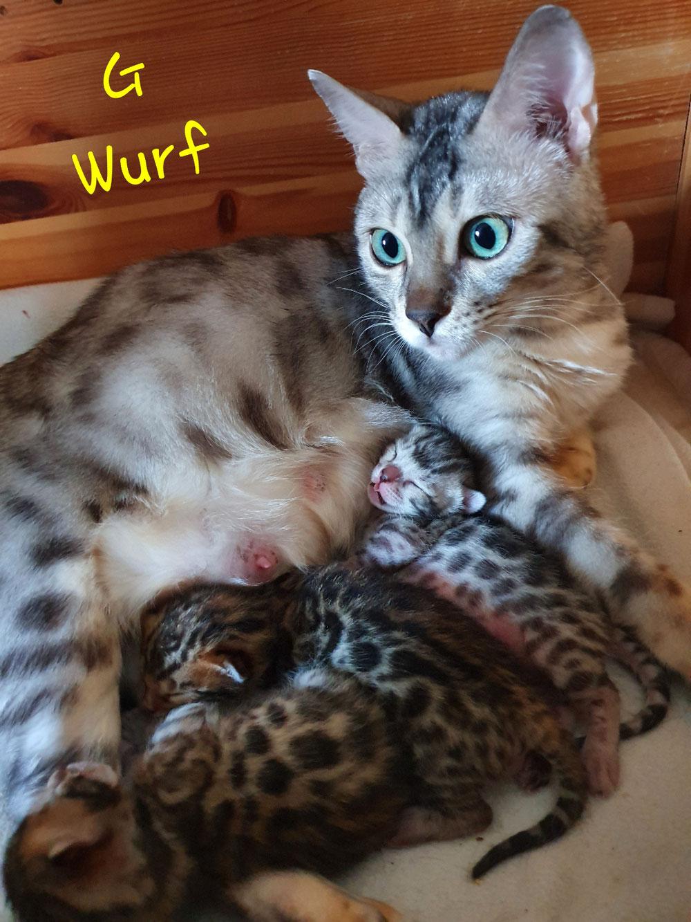 Ashari mit ihren ersten Lokibabies