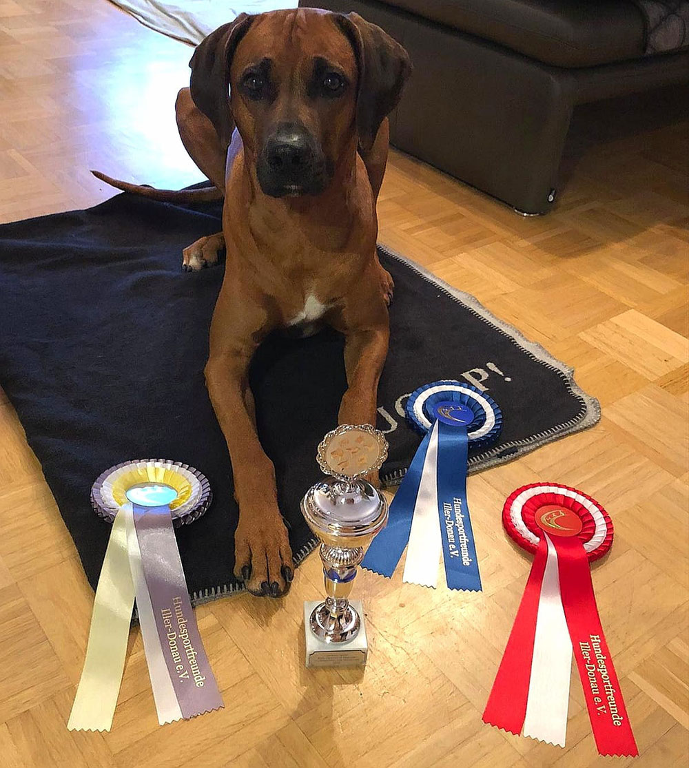Platz 1 Rally Obedience, Platz 3 Hunderennen, Platz 3 Agility 💥2,8 Jahre ❤️