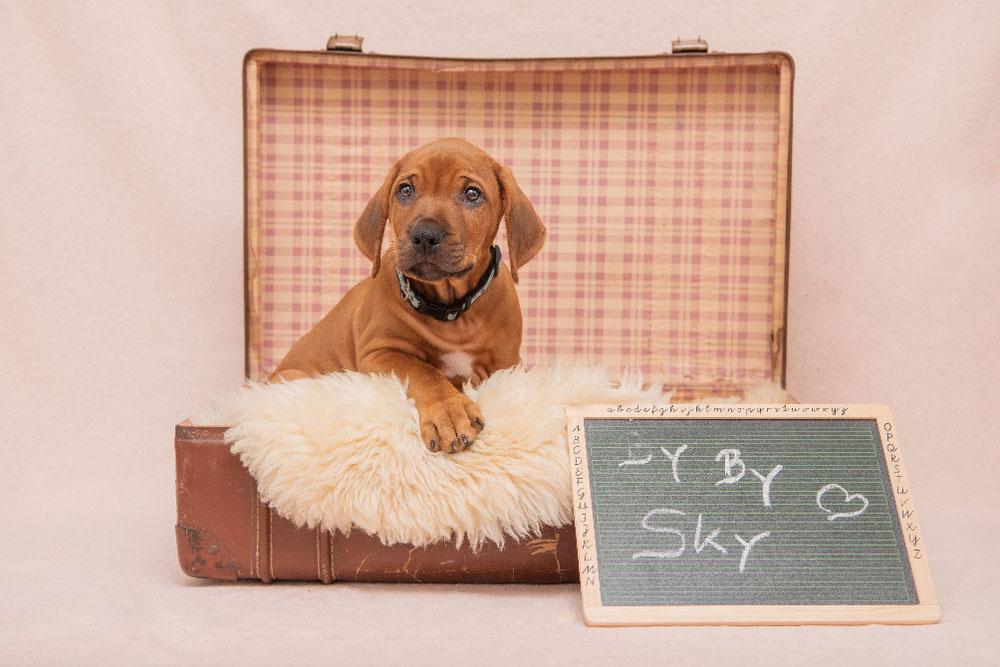 Sky lebt jetzt in Rösrath bei Köln und begleitet dort seine Familie mit zwei großen Kindern ❤️
