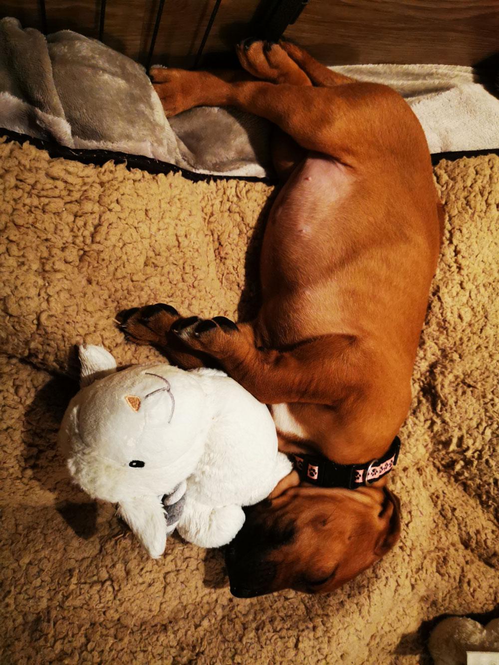 Schlafpositionen können die kleinen ❤️